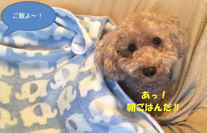f:id:nanachan59:20190102175742j:plain