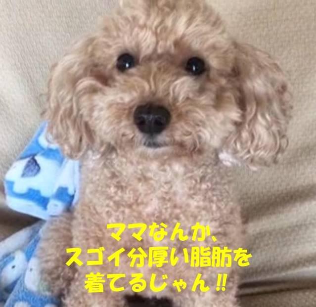 f:id:nanachan59:20190102181339j:plain