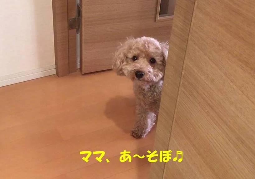 f:id:nanachan59:20190112181504j:plain