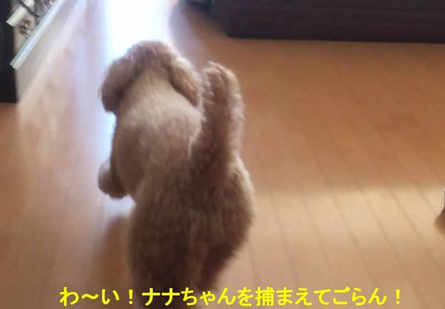 f:id:nanachan59:20190112181831j:plain