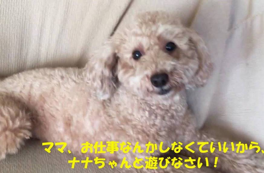 f:id:nanachan59:20190112182441j:plain