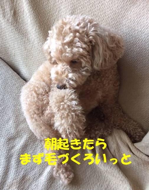 f:id:nanachan59:20190116195432j:plain