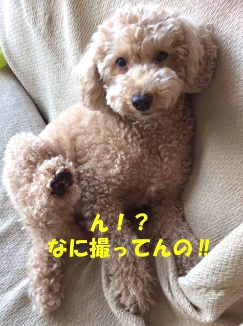f:id:nanachan59:20190116195853j:plain