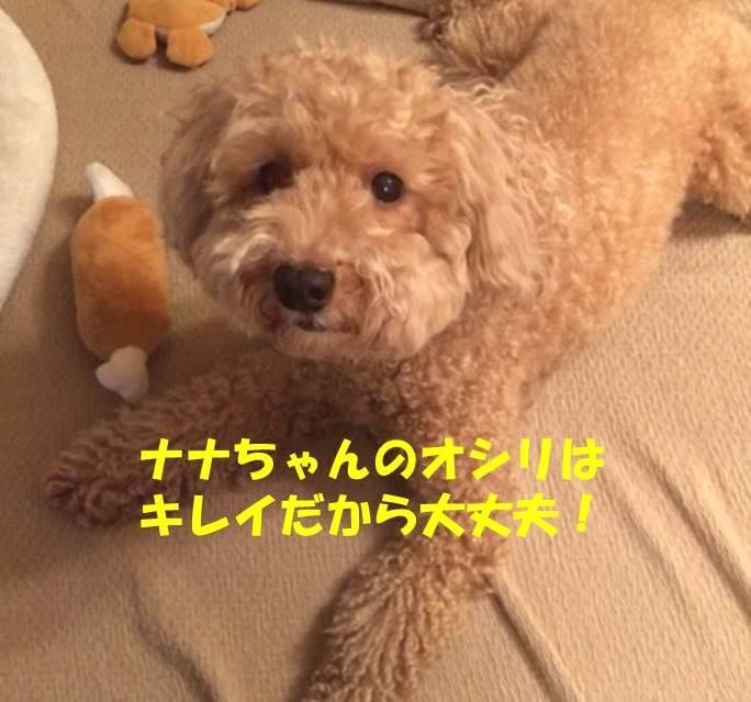 f:id:nanachan59:20190116212435j:plain