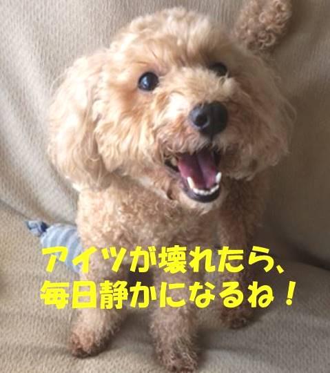 f:id:nanachan59:20190120174927j:plain
