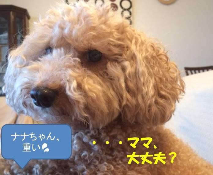 f:id:nanachan59:20190129214228j:plain