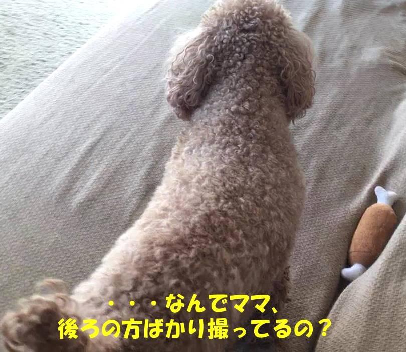f:id:nanachan59:20190129215042j:plain
