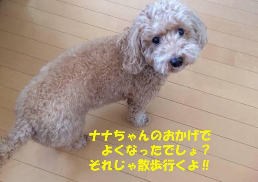 f:id:nanachan59:20190129215552j:plain
