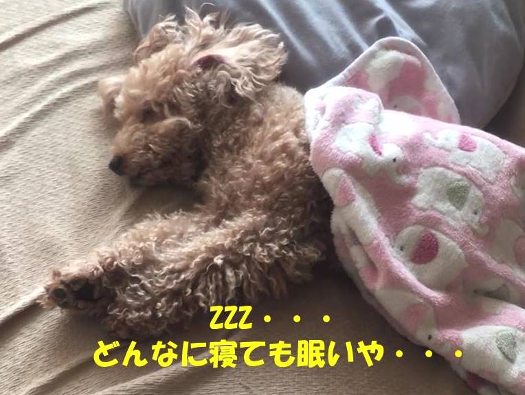 f:id:nanachan59:20190212214829j:plain