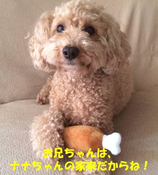 f:id:nanachan59:20190222222913j:plain