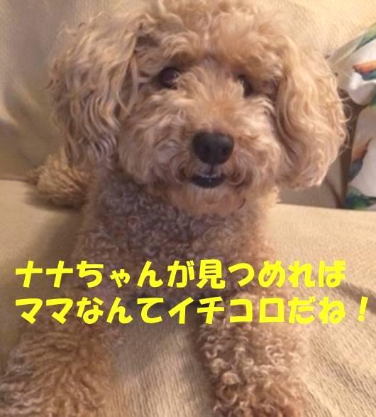 f:id:nanachan59:20190303223016j:plain