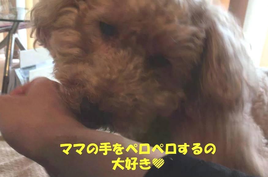 f:id:nanachan59:20190314144614j:plain