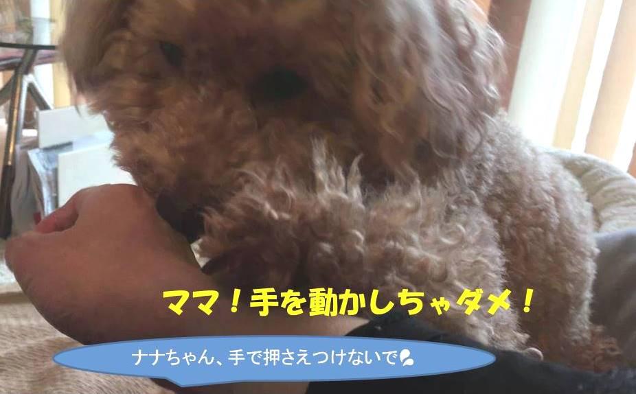 f:id:nanachan59:20190314171555j:plain