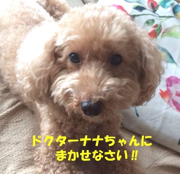 f:id:nanachan59:20190314202606j:plain
