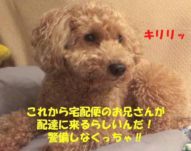 f:id:nanachan59:20190323143538j:plain