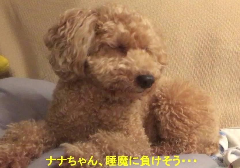 f:id:nanachan59:20190323143858j:plain