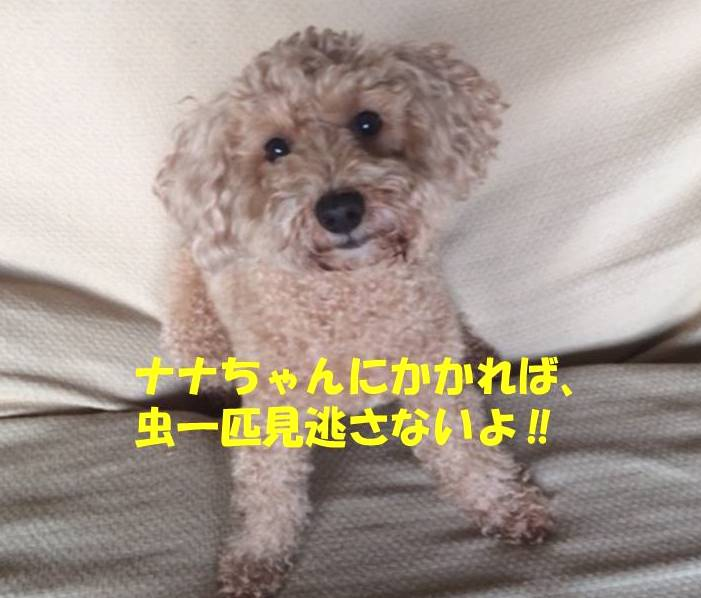 f:id:nanachan59:20190323144512j:plain