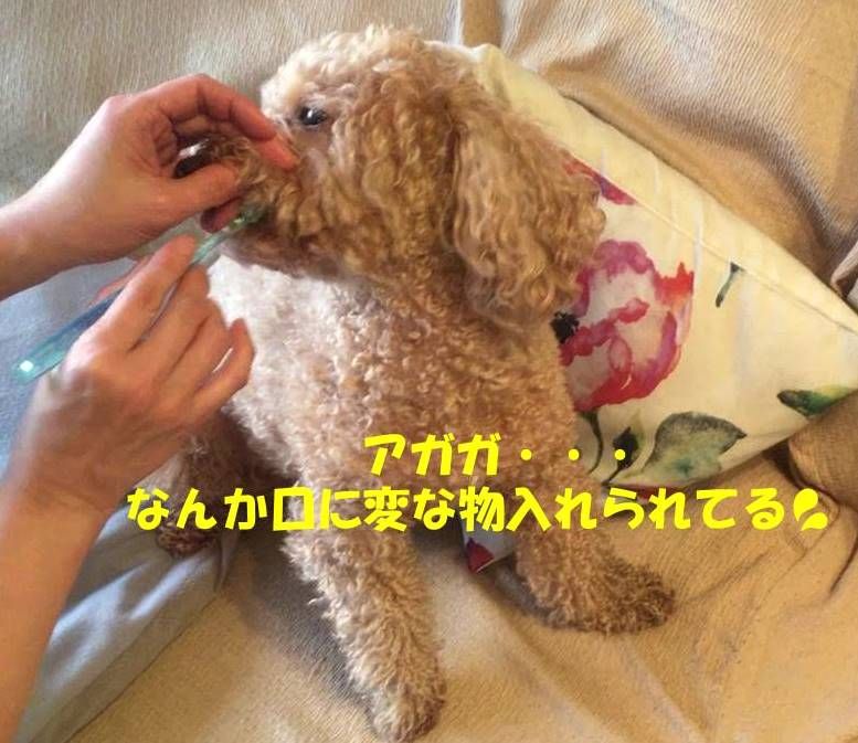 f:id:nanachan59:20190327181753j:plain
