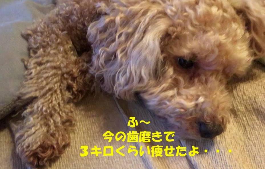 f:id:nanachan59:20190327182535j:plain