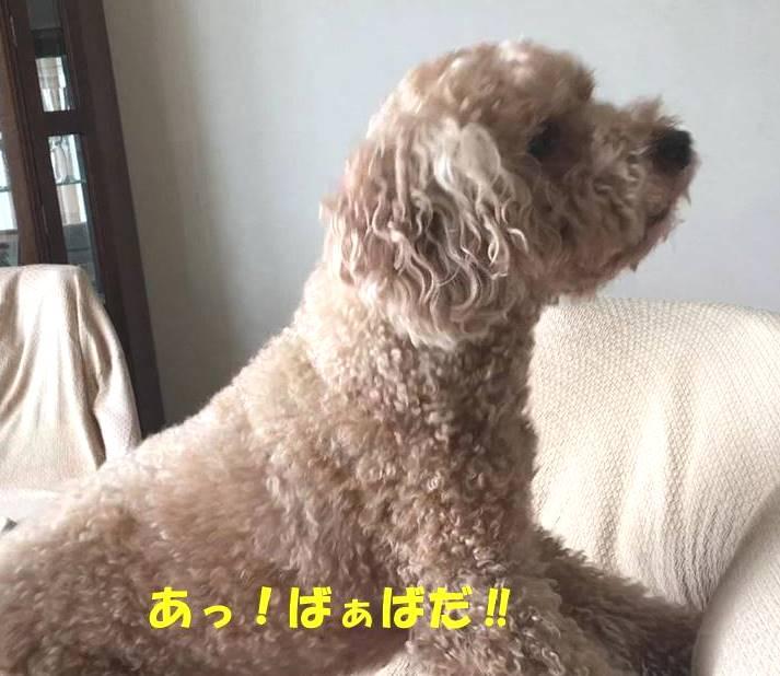 f:id:nanachan59:20190407143248j:plain