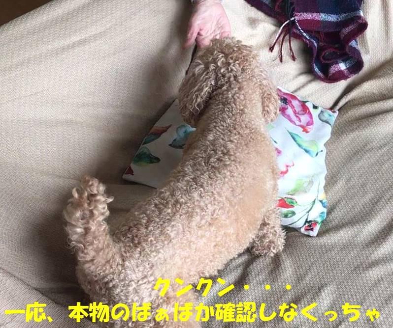 f:id:nanachan59:20190407143758j:plain