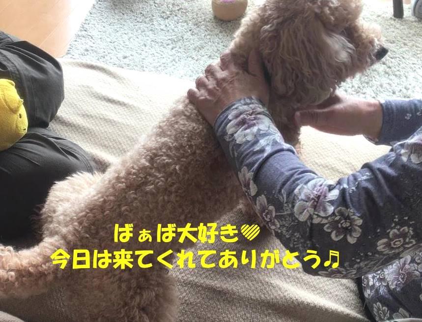 f:id:nanachan59:20190407144309j:plain