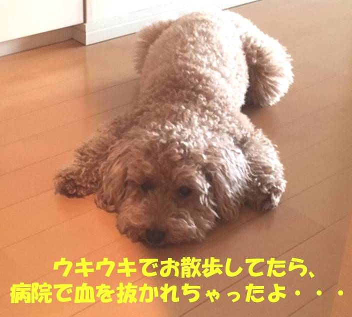 f:id:nanachan59:20190411175606j:plain