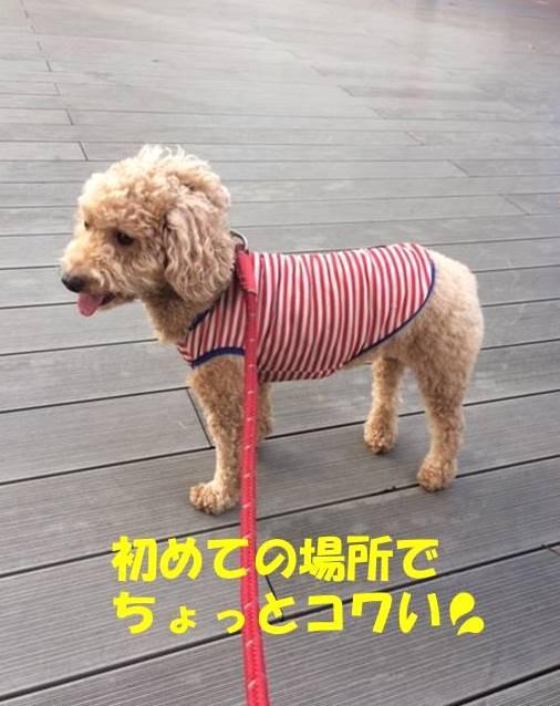 f:id:nanachan59:20190416165835j:plain