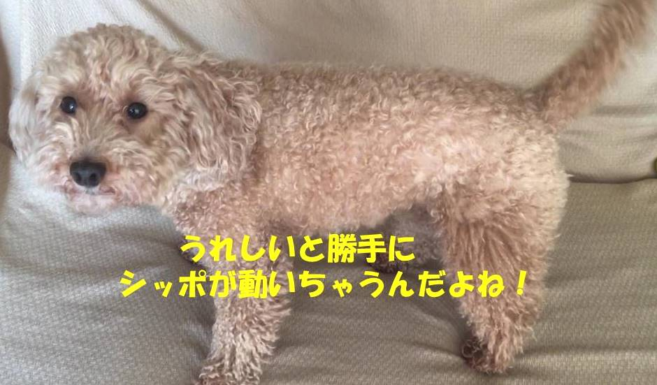 f:id:nanachan59:20190416214933j:plain