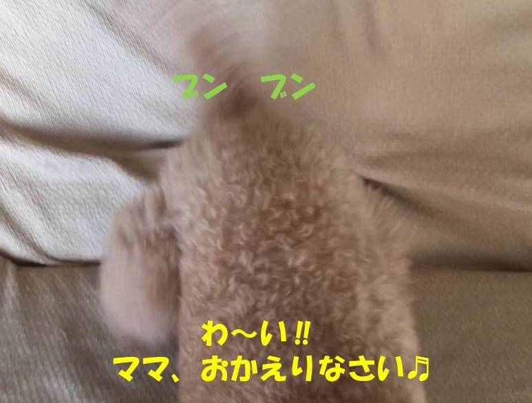 f:id:nanachan59:20190416220126j:plain