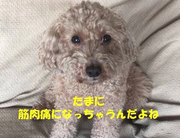 f:id:nanachan59:20190416220544j:plain
