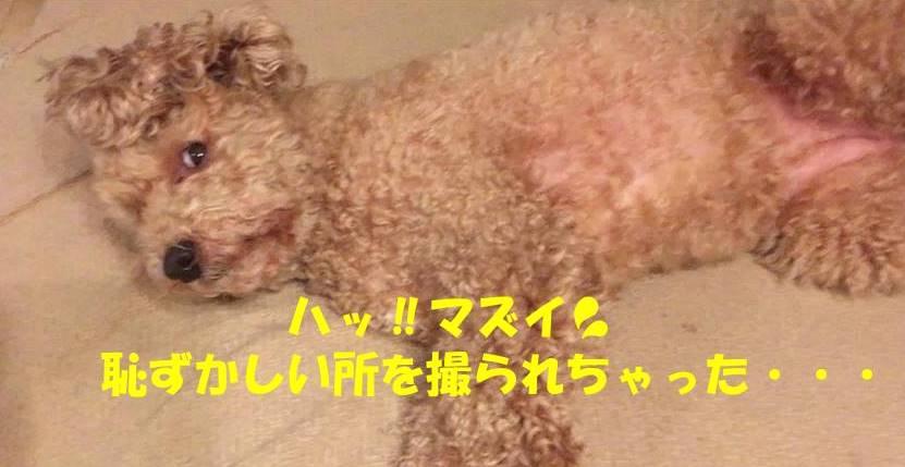 f:id:nanachan59:20190428212745j:plain