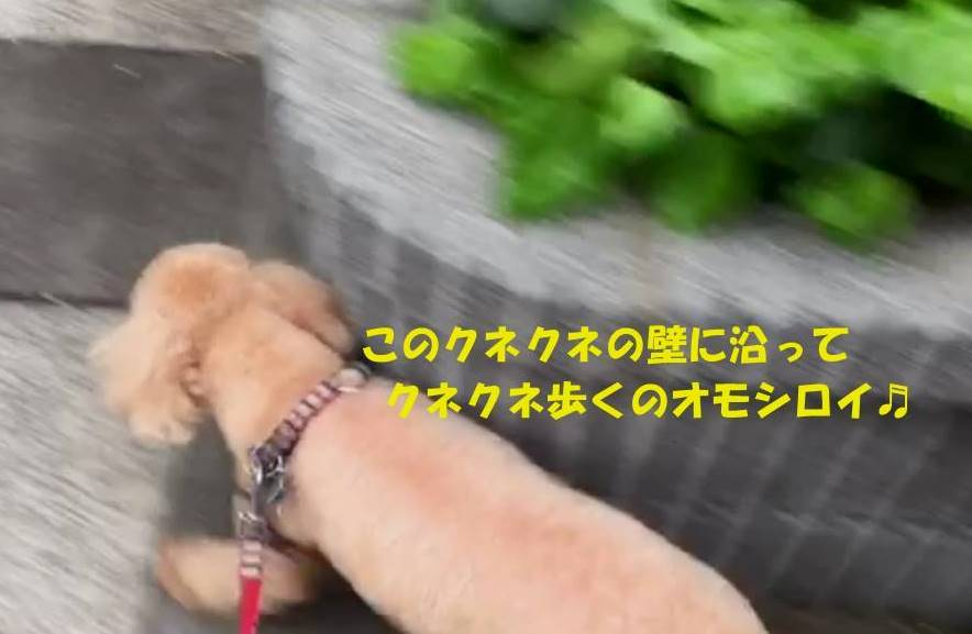 f:id:nanachan59:20190501172922j:plain