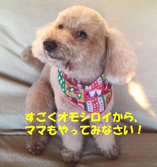 f:id:nanachan59:20190501173411j:plain