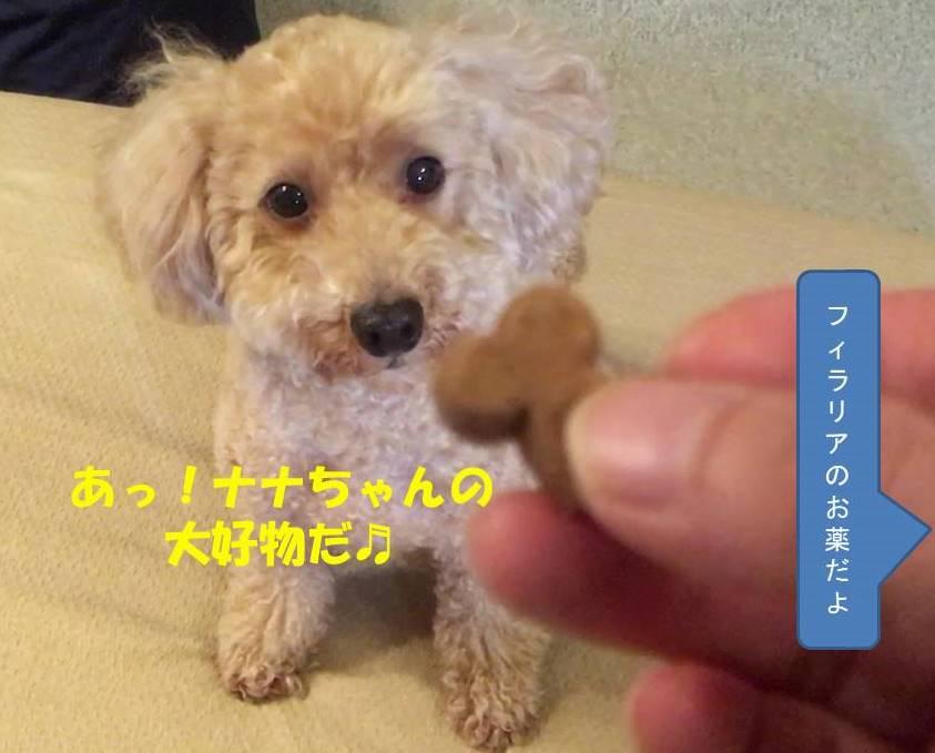 f:id:nanachan59:20190506212206j:plain