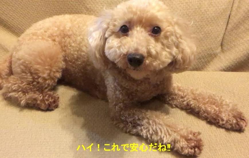 f:id:nanachan59:20190506213246j:plain