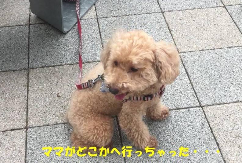 f:id:nanachan59:20190512143515j:plain