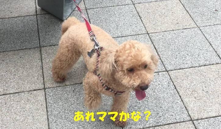f:id:nanachan59:20190512143938j:plain