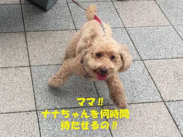 f:id:nanachan59:20190512145212j:plain