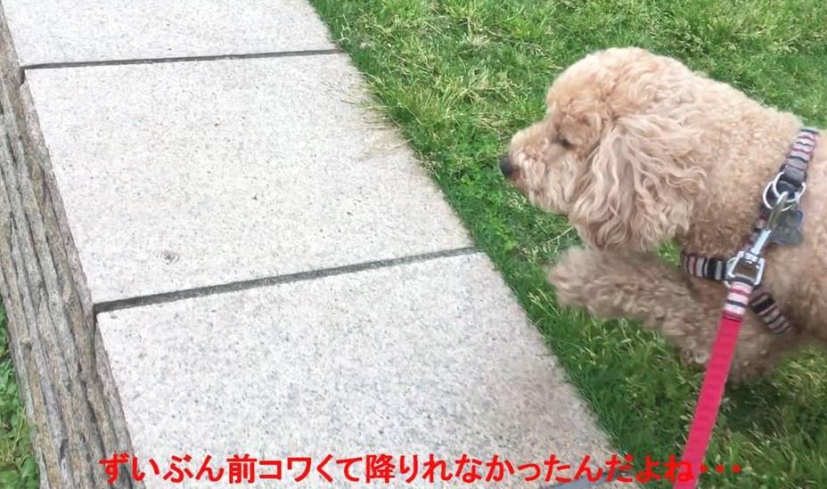 f:id:nanachan59:20190516133630j:plain