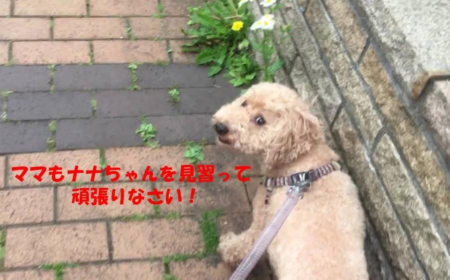 f:id:nanachan59:20190516135004j:plain
