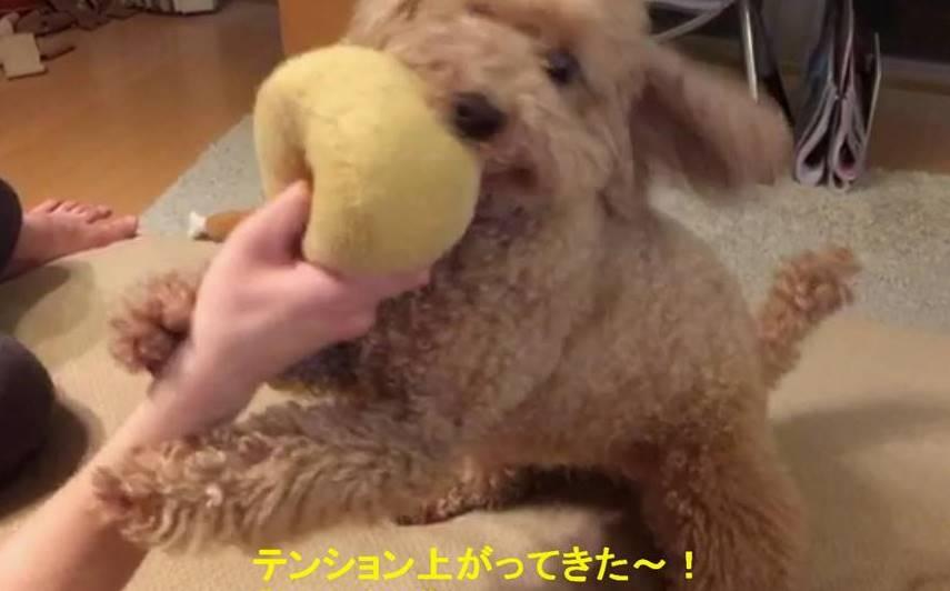 f:id:nanachan59:20190523212446j:plain