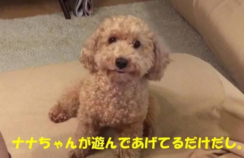 f:id:nanachan59:20190523221039j:plain