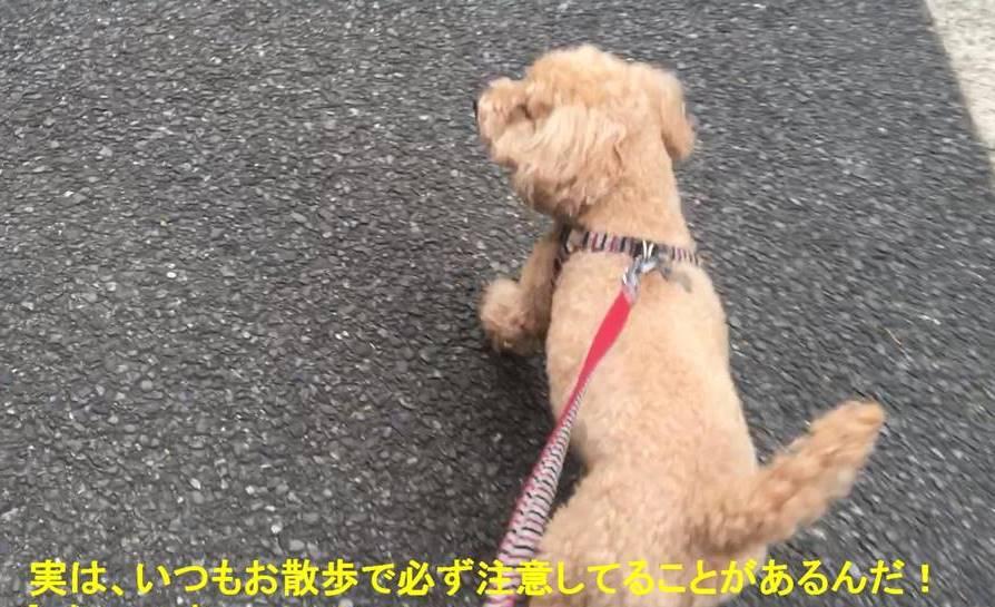 f:id:nanachan59:20190603165924j:plain
