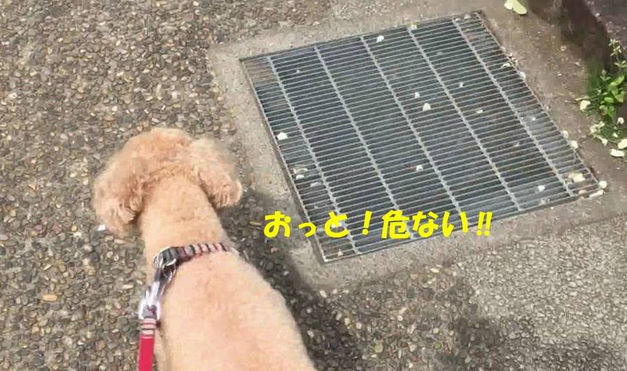 f:id:nanachan59:20190603170518j:plain