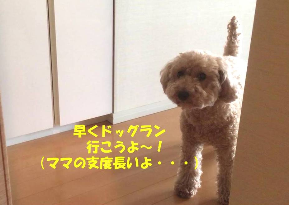 f:id:nanachan59:20190611205624j:plain
