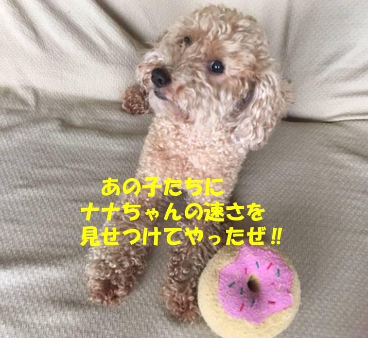 f:id:nanachan59:20190611223640j:plain