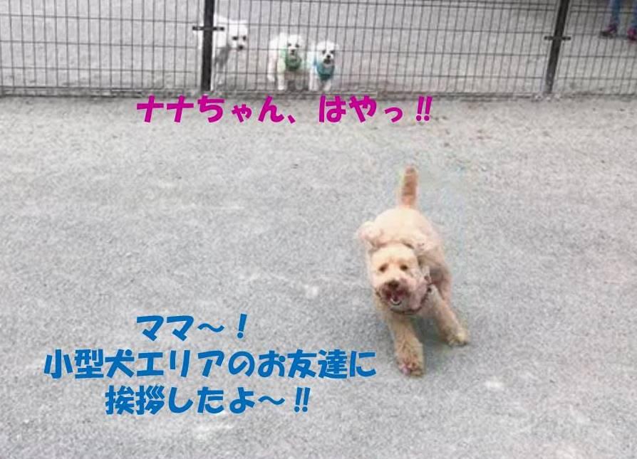 f:id:nanachan59:20190611224622j:plain
