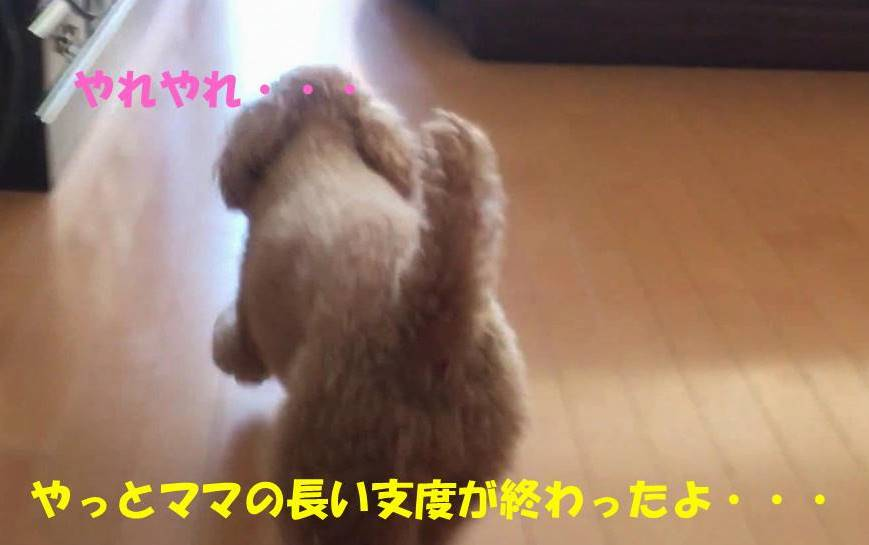 f:id:nanachan59:20190618160413j:plain