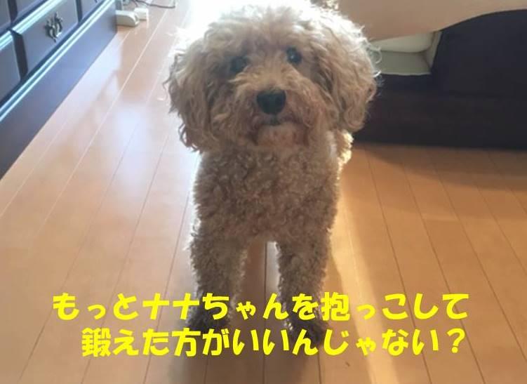f:id:nanachan59:20190618164150j:plain